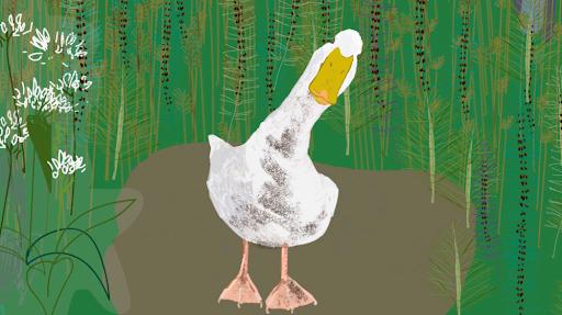Melissa Culhane, A Quack too Far